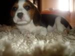 Lola15